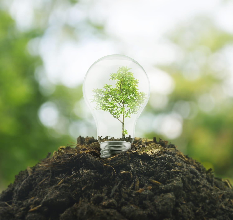 Dalarna och Värmland får stöd för att driva skoglig tillväxt